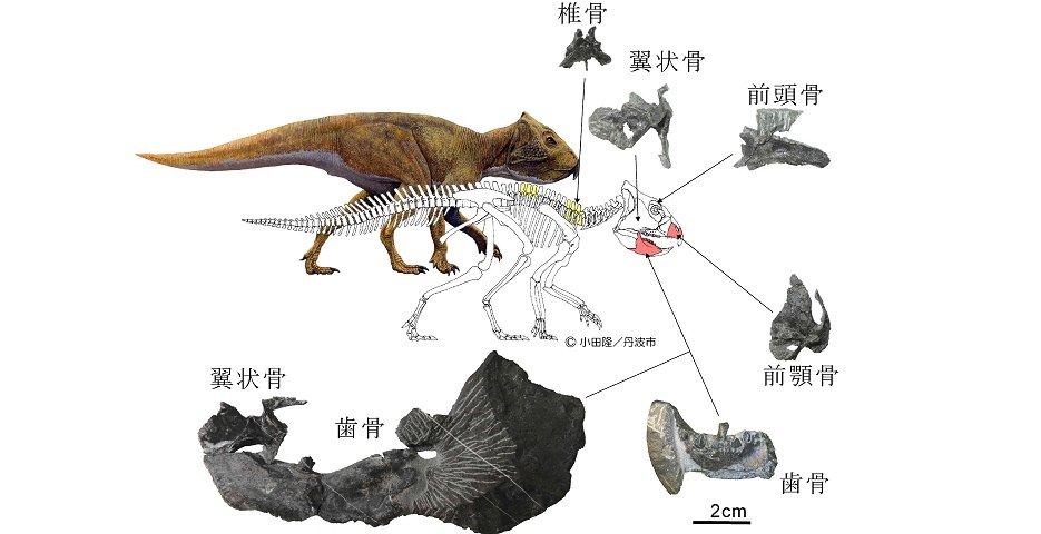 電子版】白亜紀地層から草食恐竜...